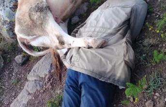 Yıldırım çarpan çoban hayatını kaybetti