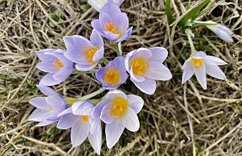 Ağrı'da İlkbahar renk cümbüşü oluşturdu