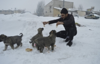 Kar yağışı altında sokak hayvanları için seferber...