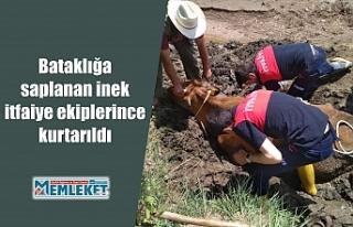 Bataklığa saplanan inek itfaiye ekiplerince kurtarıldı