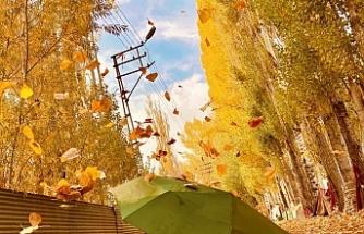 Sonbaharın sarı rengi büyüledi