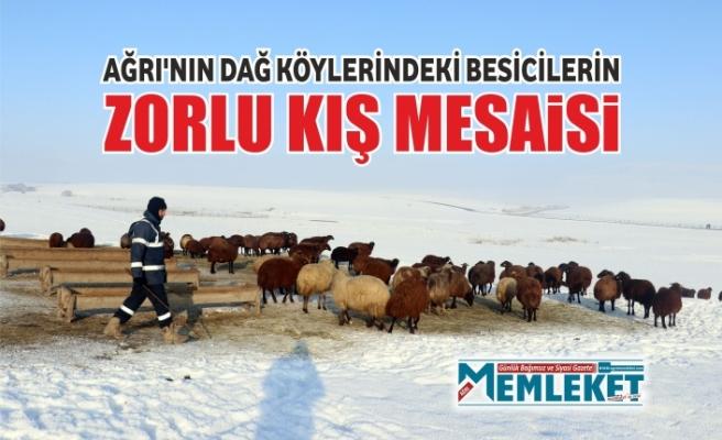 Ağrı'nın dağ köylerindeki besicilerin zorlu kış mesaisi