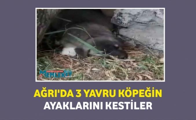 Ağrı'da 3 yavru köpek ayakları kesilmiş halde bulundu