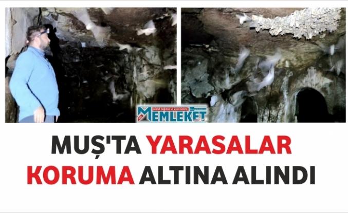 MUŞ'TA YARASALAR KORUMA ALTINA ALINDI