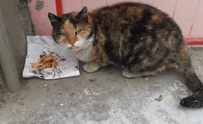 Ağrı Halkı Sokak Hayvanlarına Sahip Çıkıyor
