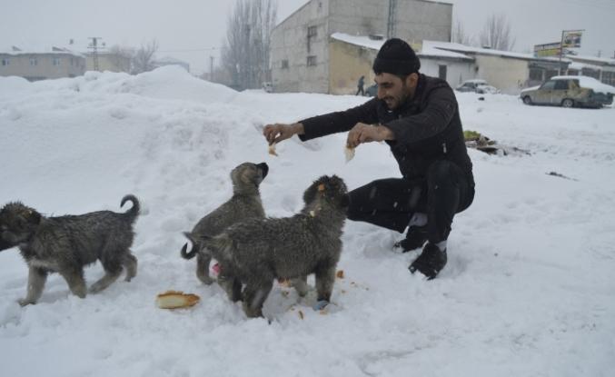 Kar yağışı altında sokak hayvanları için seferber oldu