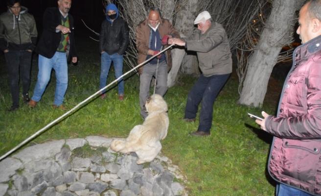 Gebe köpek düştüğü kuyudan kurtarıldı