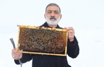 Arılarını 6 ay kar altında bekletiyor