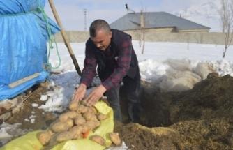 Toprağa gömülen patatesler sofraların vazgeçilmezi oluyor