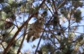 Baykuşlar okulun bahçesini mesken tuttu