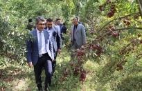 İl Tarım ve Orman Müdürlüğünce Doğubayazıt İlçesine bağlı Örtülü Köyü'nde elma hasat etkinliği düzenlendi.